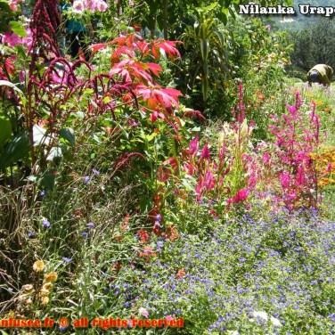 nilanka-urapelewwe-blog-voyage-srilanka-hakgala-garden-nuwara-eliya-travel-blog-telunfusee-10