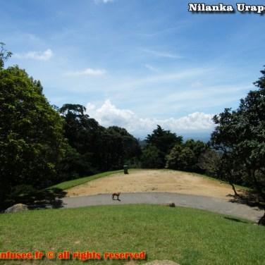 nilanka-urapelewwe-blog-voyage-srilanka-hakgala-garden-nuwara-eliya-travel-blog-telunfusee-26