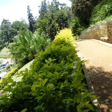 nilanka-urapelewwe-blog-voyage-srilanka-hakgala-garden-nuwara-eliya-travel-blog-telunfusee-91