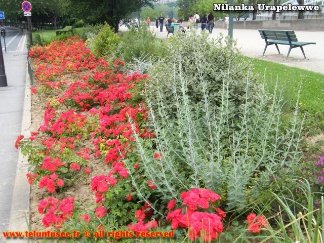 nilanka-urapelewwe-blog-voyage-france-travel-blog-telunfusee-2