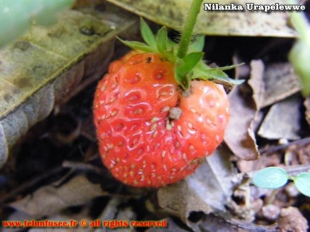 nilanka-urapelewwe-blog-voyage-sri-lanka-adisham-bunglow-travel-blog-telunfusee-4