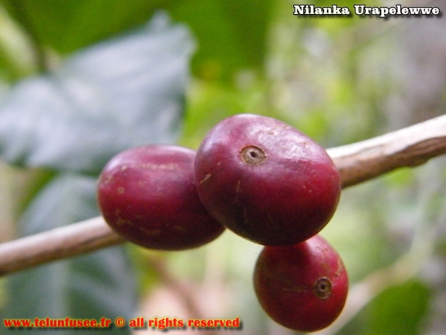 nilanka-urapelewwe-blog-voyage-sri-lanka-adisham-bunglow-travel-blog-telunfusee-5