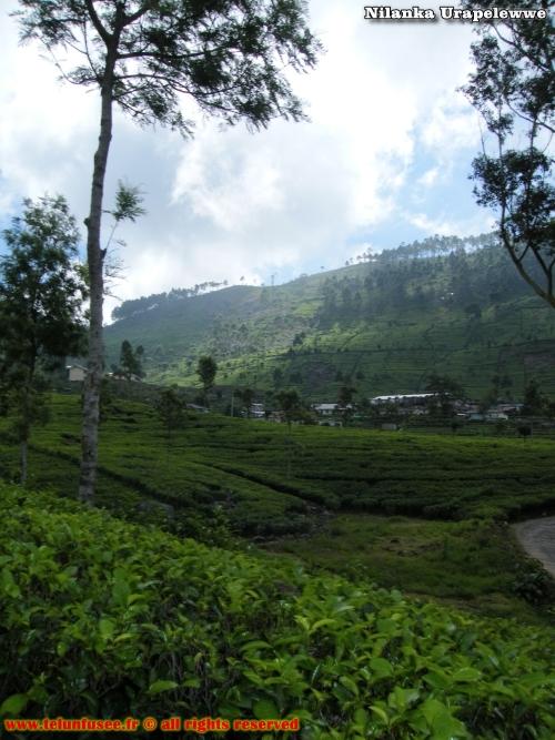 nilanka-urapelewwe-blog-voyage-sri-lanka-bandarawela-travel-blog-telunfusee-2