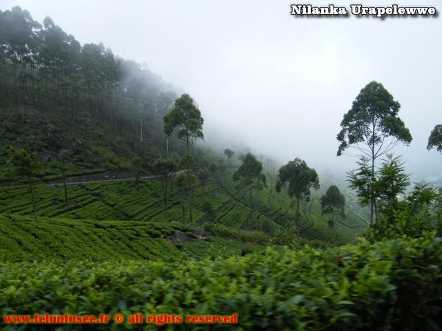 nilanka-urapelewwe-blog-voyage-sri-lanka-bandarawela-travel-blog-telunfusee-6