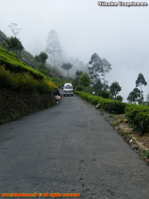 nilanka-urapelewwe-blog-voyage-sri-lanka-dambethanna-liptons-seat-travel-blog-telunfusee-4