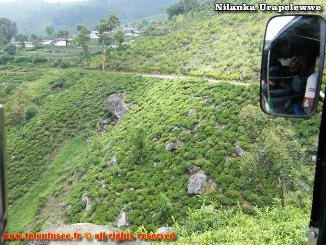 nilanka-urapelewwe-blog-voyage-sri-lanka-haputale-travel-blog-telunfusee-7