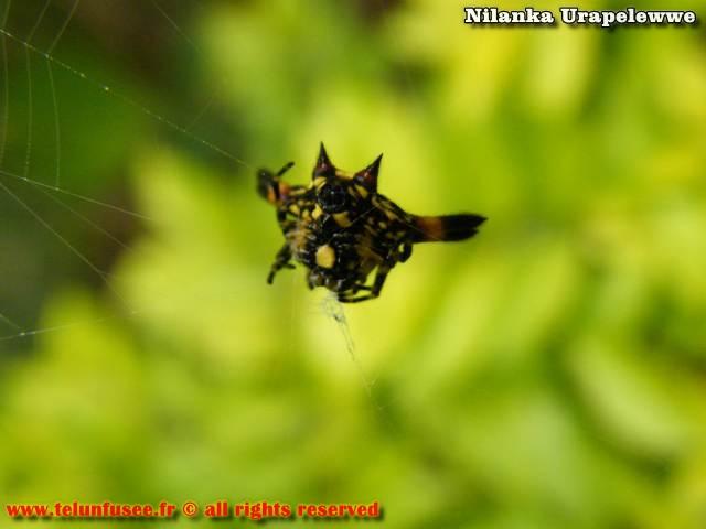 nilanka-urapelewwe-blog-voyage-sri-lanka-kalupahana-babarakande-falls-travel-blog-telunfusee-7