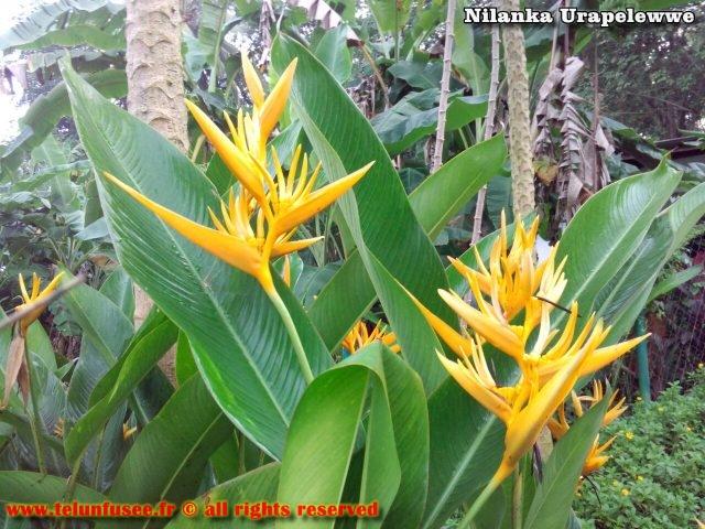 nilanka-urapelewwe-blog-voyage-sri-lanka-kalutara-travel-blog-telunfusee-6