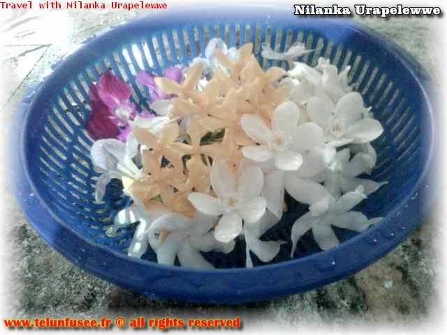 nilanka-urapelewwe-blog-voyage-sri-lanka-kalutara-travel-blog-telunfusee-8