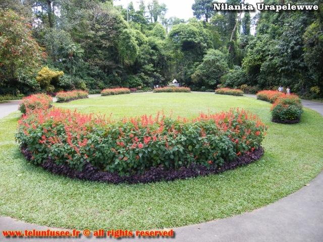 nilanka-urapelewwe-blog-voyage-sri-lanka-kandy-travel-blog-telunfusee-19