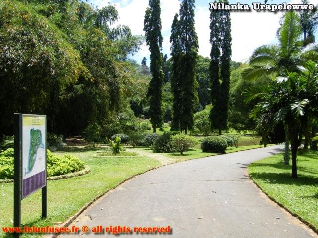 nilanka-urapelewwe-blog-voyage-sri-lanka-kandy-travel-blog-telunfusee-20
