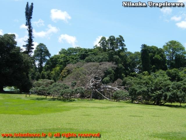 nilanka-urapelewwe-blog-voyage-sri-lanka-kandy-travel-blog-telunfusee-23