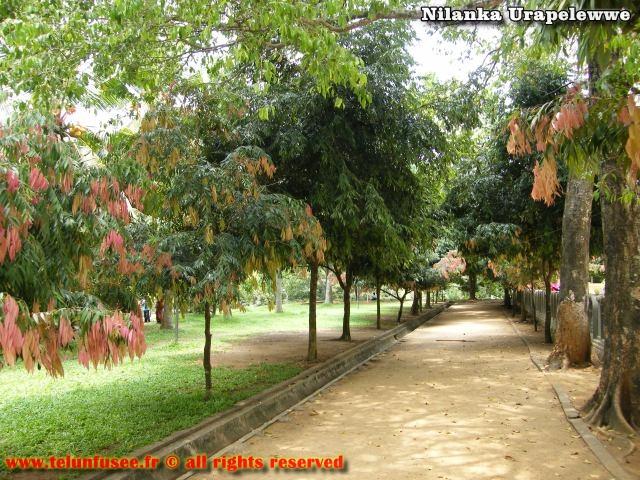 nilanka-urapelewwe-blog-voyage-sri-lanka-kelaniya-temple-travel-blog-telunfusee-20