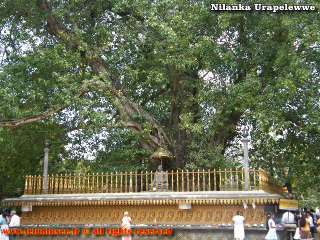 nilanka-urapelewwe-blog-voyage-sri-lanka-kelaniya-temple-travel-blog-telunfusee-7