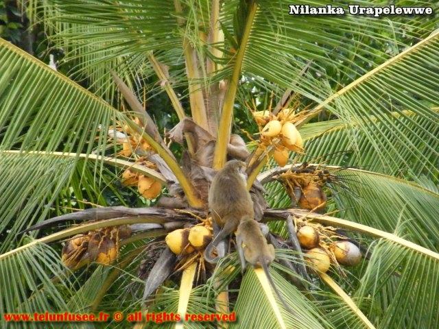 nilanka-urapelewwe-blog-voyage-sri-lanka-mihintale-travel-blog-telunfusee-4