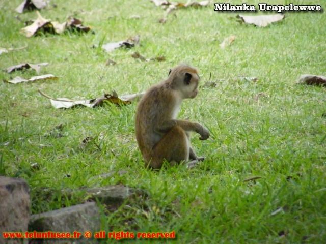nilanka-urapelewwe-blog-voyage-sri-lanka-sigiriya-travel-blog-telunfusee