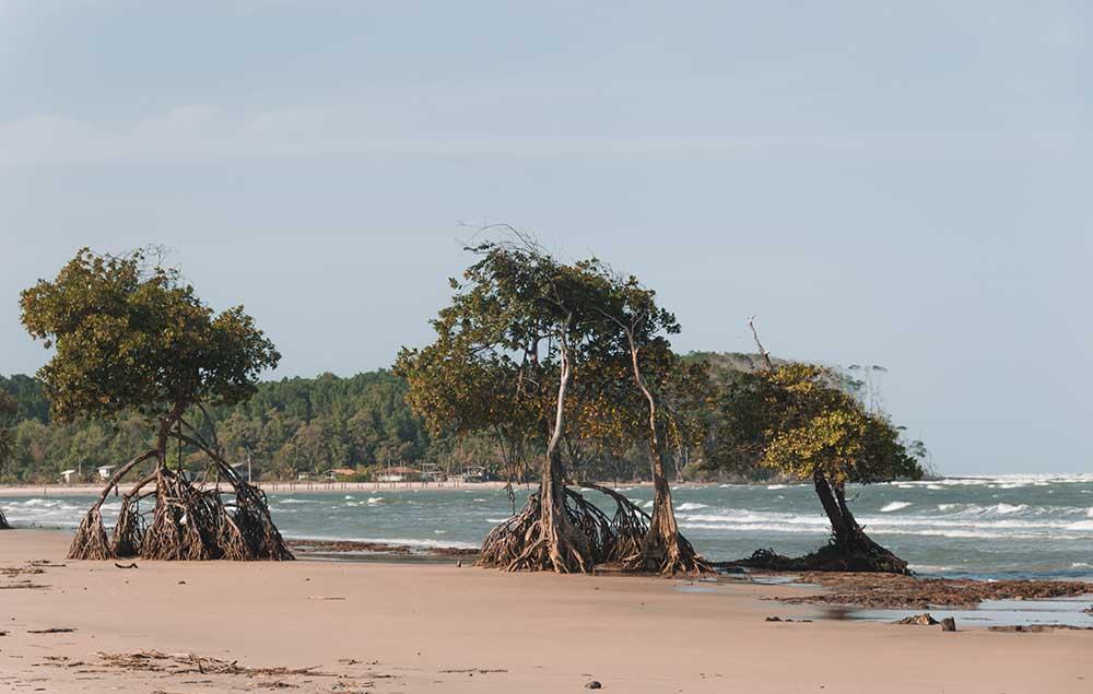 A praia da barra velha tem o mar mais agitada de todas as praias da ilha de marajó