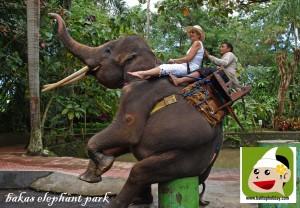 naik-gajah-di-bali