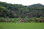 Desa Klungkung (dok. temansetaman)