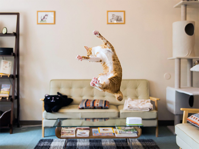 flying-cat13
