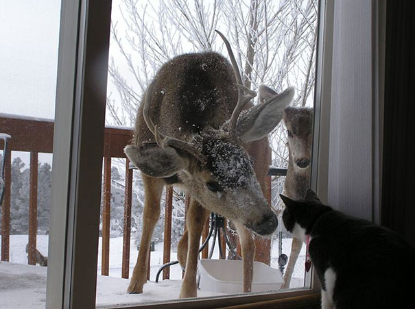 animals-asking-to-go-inside-333__605