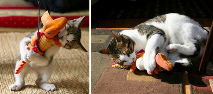 before-and-after-growing-up-cats-27__700