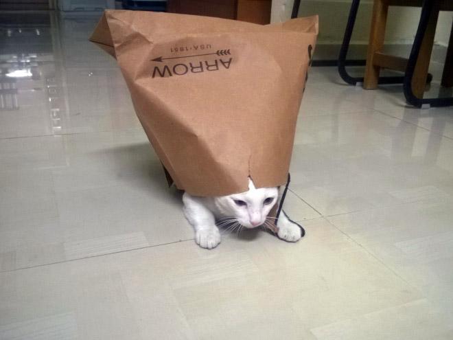 cat-bag5