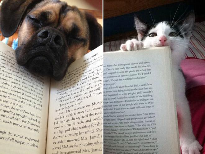 reading-pets8