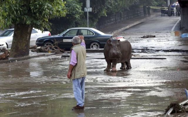 flooding_causes_zoo_animals_flee_the_tbilisi_zoo_13