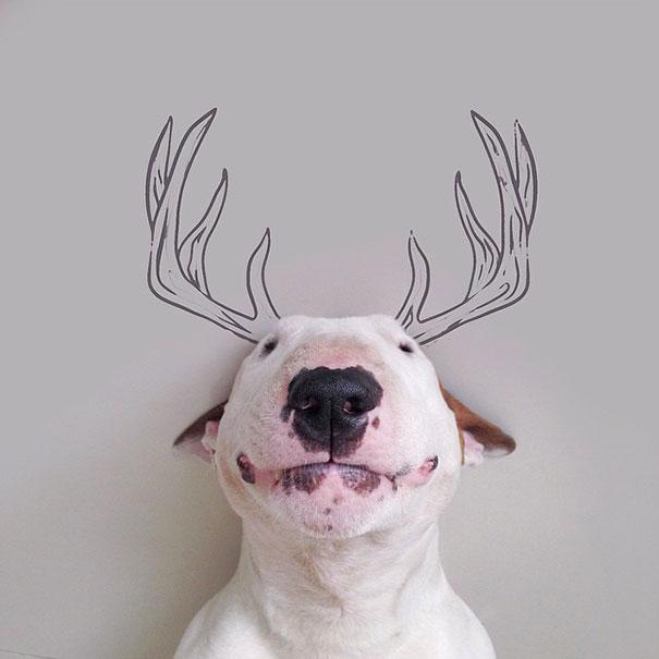 Jimmy-the-Bull-Terrier15__605