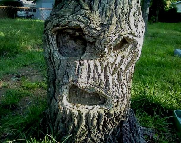 tree-610x483