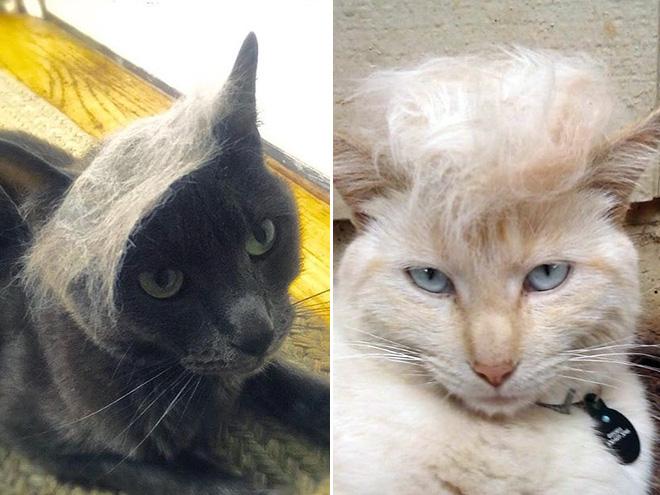 trump-cat16