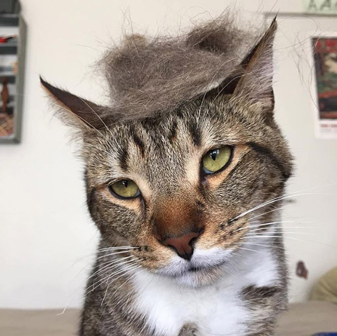 trump-cat4