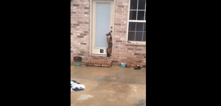 Epic Cat Door Fail   YouTube