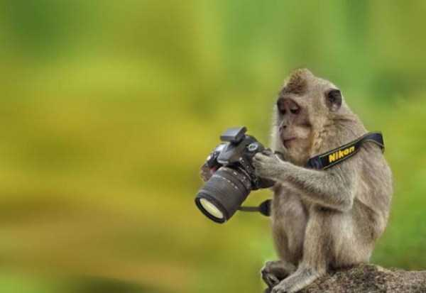 animals-photographers-10