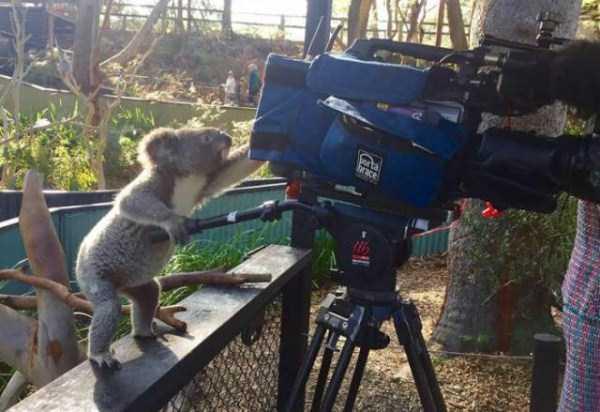 animals-photographers-11