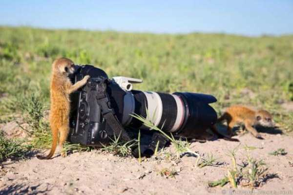 animals-photographers-13