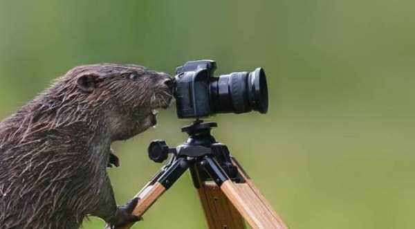 animals-photographers-6