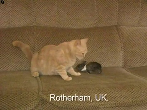 みなしごウサギも我が子同然に育てるお母さん猫01