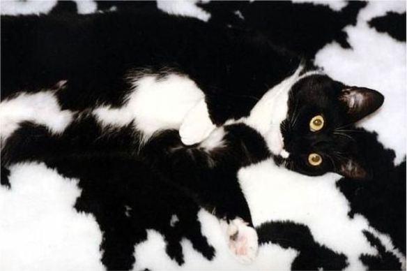 猫はかくれんぼの達人! 猫の模様はちゃんと意味があります。08