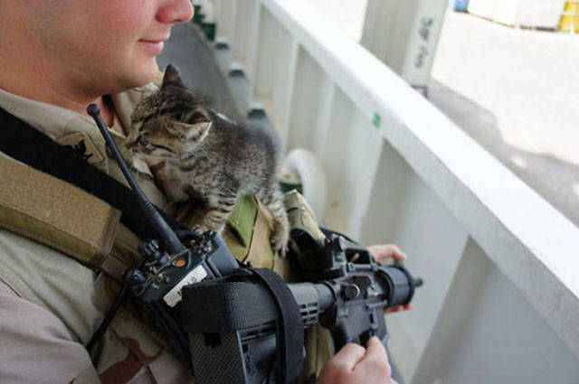 soldiers_share_some_bonding_time_with_cats_640_10
