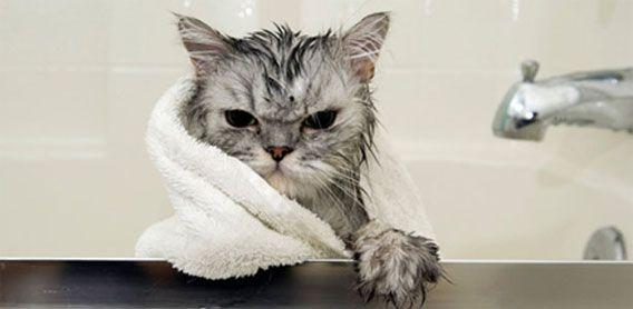 14-お風呂が嫌いな猫の不機嫌な写真15枚