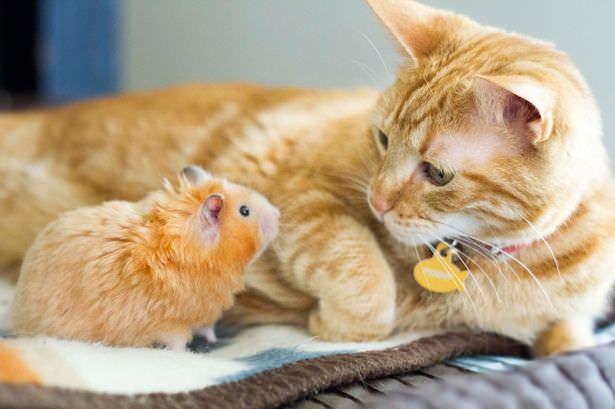 01-トムとジェリー? 猫とハムスターの仲良し画像にホッコリ(。・∀・。)