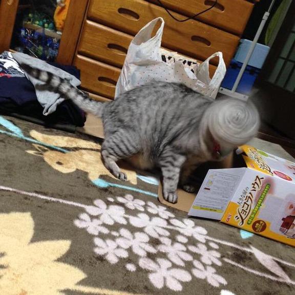 04-猫の新必殺技「猫ドリル」って何?