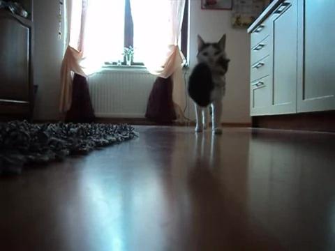 07-お母さんどこぉ? 母猫がちょっとどこかに行って寂しそうな仔猫