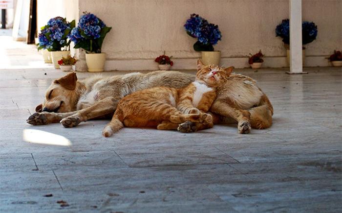 ずっと友だち! 猫と犬のすてきな関係!13