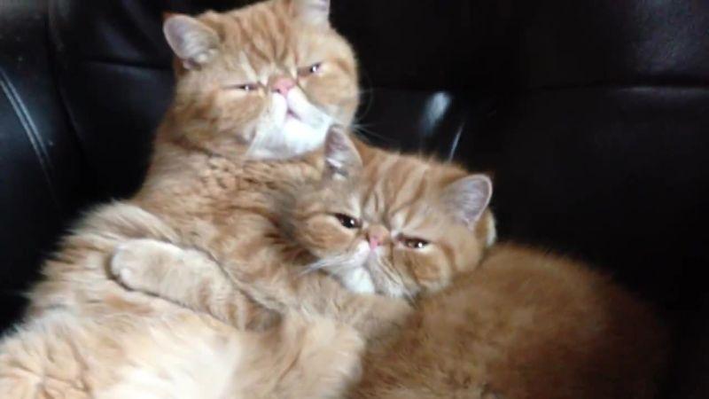 01-ツンデレな猫の兄弟の仲良し動画!気持ちの切り替え早すぎ!
