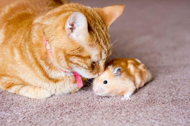 02-トムとジェリー? 猫とハムスターの仲良し画像にホッコリ(。・∀・。)
