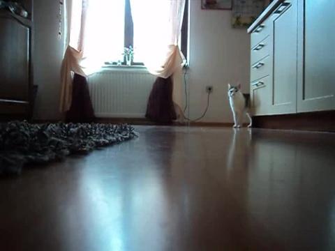 061-お母さんどこぉ? 母猫がちょっとどこかに行って寂しそうな仔猫