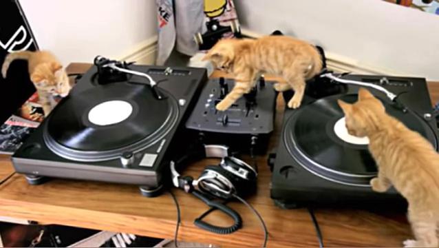 02-DJ 仔猫が奏でるキュンキュンビートに心躍る